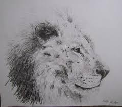 male lion sketch by marymacinblack on deviantart