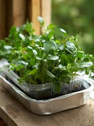Vegetable Container Gardening Guide by How To Grow A Watercress Container Garden Hgtv
