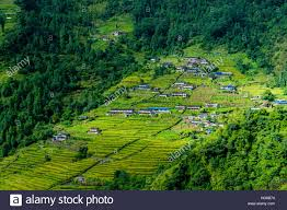 Landscape With Houses by Village Houses In Hilly Landscape With Green Terrace Fields Stock