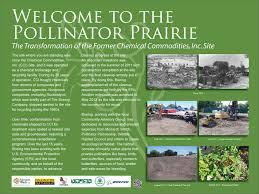 plants native to kansas pollinator prairie pollinator org