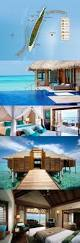 best 25 sun island resort maldives ideas on pinterest sun