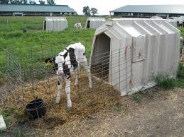 Calf Hutches For Sale The Dairy Mom Growing Up On Our Farm Calf To Heifer To Milk Cow