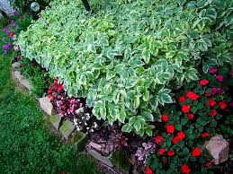 Flower Shrubs For Shaded Areas - best deer resistant plants and shrubs for your area the tree center
