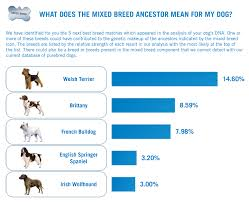 american pitbull terrier traits my two pitties norman u0027s dna results