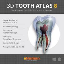 Interactive 3d Anatomy 3d Tooth Atlas 8 Ehuman