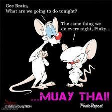 Muay Thai Memes - martial arts humor and funny memes muay thai bjj pinterest