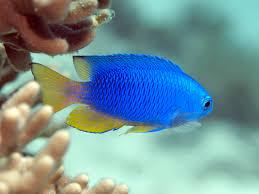 a beginner u0027s guide to tropical fish identification u2022 scuba diver life