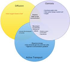 diffusion osmosis and active transport venn diagram creately