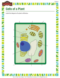 cells of a plant printable science worksheets for 5th grade