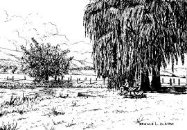 How To Draw Landscapes by How To Draw A Willow Tree Landscape In Pen And Ink U2014 Online Art