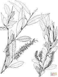 willows coloring pages free coloring pages