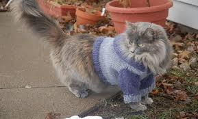 sweaters for cats cats in sweaters cat hoodie knitting pattern care2 healthy living