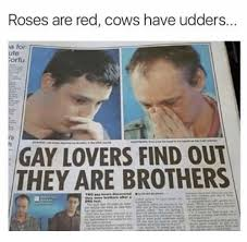 Ute Memes - roses are red cows have udders ute corfu gay lovers find out they