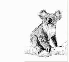bartender resume template australia mapa koala sewing chair 25 best koala images on pinterest koalas koala bears and koala