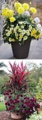 the 25 best large flower pots ideas on pinterest flower