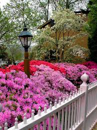 Flowering Shrubs That Like Full Sun - types of bushes flowering hgtv
