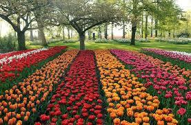 flowers international prettiest international flowers florist