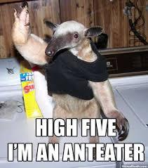 Anteater Meme - 00498626 jpg 738 i m an anteater know your meme