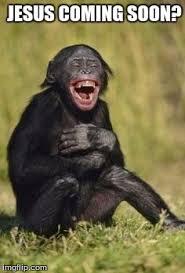 Monkey Jesus Meme - laughing monkey imgflip
