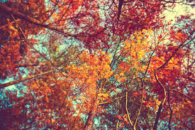 Cute Fall Wallpaper by Autumn Trees Wallpaper