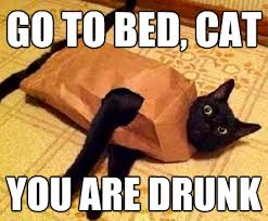 Drunk Cat Meme - cat go home you are drunk know your meme