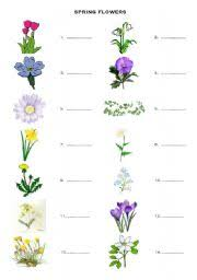 worksheet spring flowers vocabulary