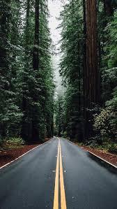 green forest road tall trees iphone 5 wallpaper hd desktop