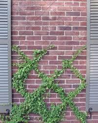 Trellis For Wisteria Best 25 Clematis Trellis Ideas On Pinterest Vine Yard Clematis