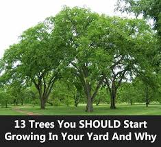 13 trees you should start growing in your yard and why mental scoop