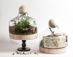 the deluxe lucky gardener diy kit by twig terrarium twig