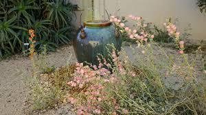 native plants los angeles 5 gorgeous u0027no fuss u0027 plants that thrive on next to no water la times
