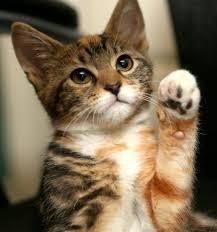 Cute Cat Meme Generator - cute cat meme generator imgflip
