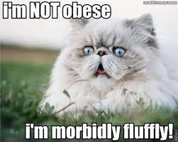 Diabetes Cat Meme - morbidly fluffy cat must cats pinterest fluffy