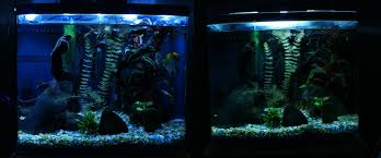 Led Aquarium Lighting Aquarium Lighting Information Guide Reef Planted Par Pur Pas