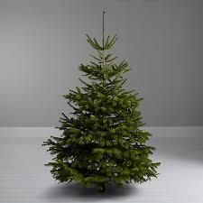 buy lewis nordmann fir real tree 6 7ft at
