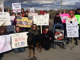 protesters call for ospca to save 21 dogs planned to be euthanized