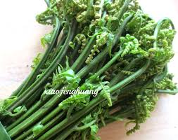 malaysia wild vegetables u2013 malaysia vegetarian food