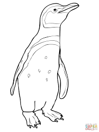 magellanic penguin coloring free printable coloring pages