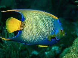 fabulous animals world various types of aquarium fishes is here