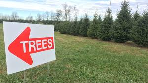 christmas tree shoppers out earlier this year due to shortages