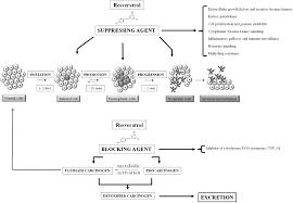 frontiers anticancer molecular mechanisms of resveratrol nutrition