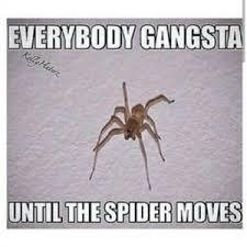 Funny Spider Meme - spider memes kappit