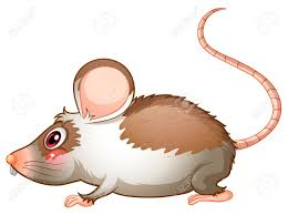 mouse clipart side view pencil and in color mouse clipart side view