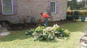affordable tree service crossville tn choice tree service crossville tn best tree 2017