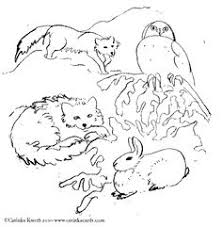 image result for coloring pages animals plains us native