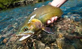 sunday classic how to fly fish straight sections of trout water