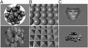 cat orie si e auto b curvature processing in macaque visual cortex pnas