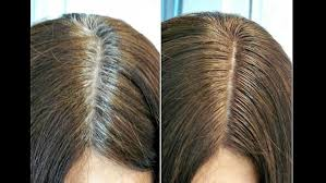 high lighted hair with gray roots coloring gray roots on highlighted hair archives frenzyhairstudio com