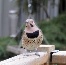 the backyard bird count is coming bird canada