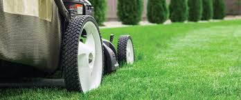 keep your lawn healthy this summer tips from a professional